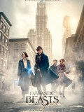 Fantastic Beasts and Where to Find Them - Imported 70mm Print