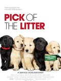 Pick of the Litter - Dog Friendly Session